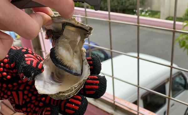 牡蠣の殻をあける